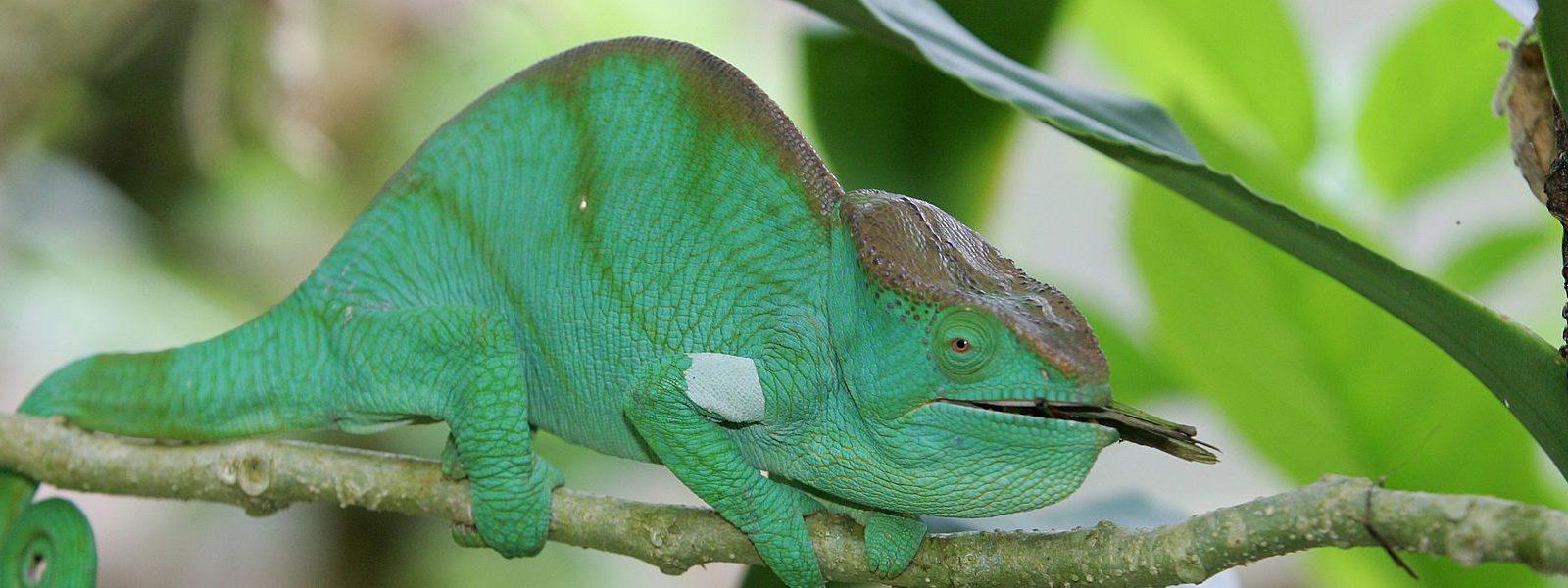 Entwaldung in Madagaskar