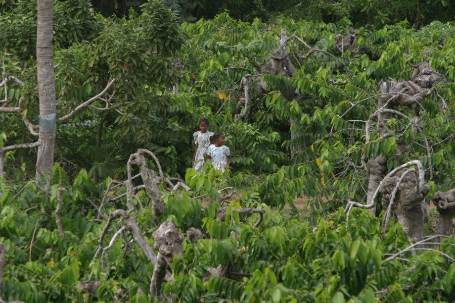 Entwaldung in Madagaskar 1