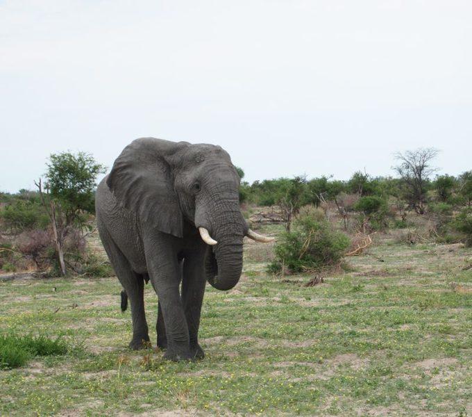 """Eine Elefant des """"Elephant Hills Camp"""" in Thailand"""
