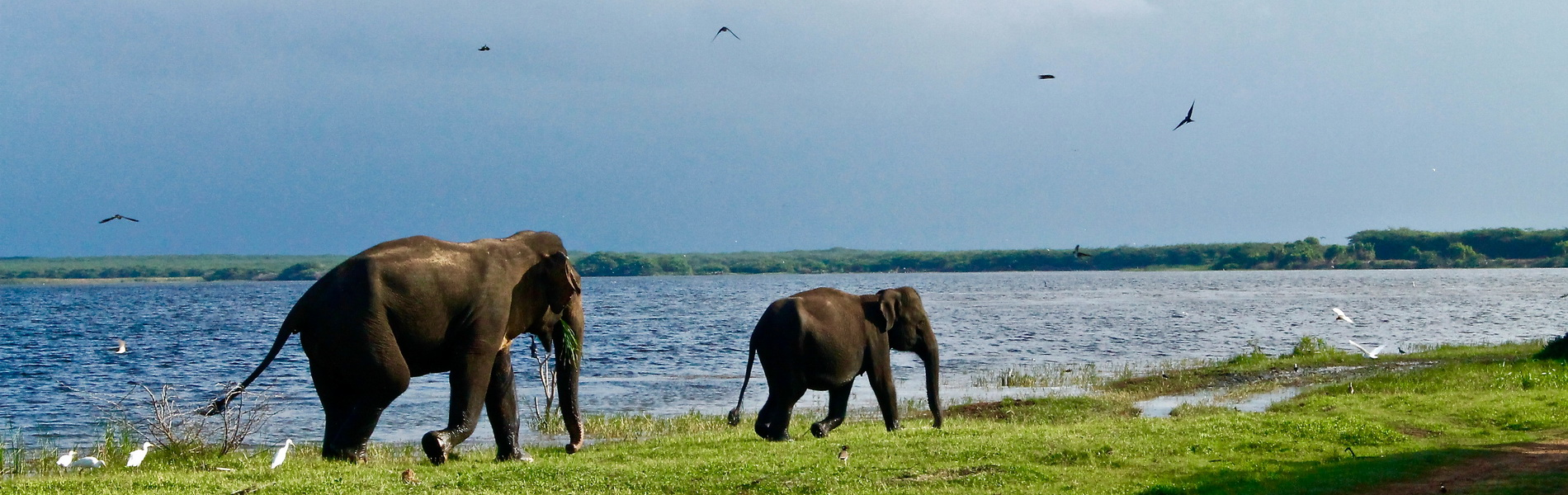 Elefanten vor einem See, Photo by Roxanne Desgagnés on Unsplash Nachhaltigkeit