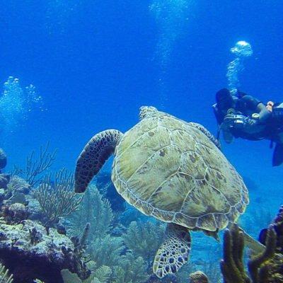 Taucher fotographieren Schildkröte im Riff