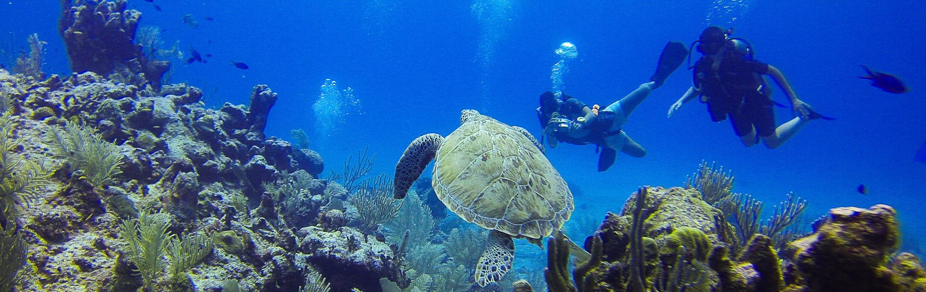 Tauchsafari von Bali über Lombok nach Komodo