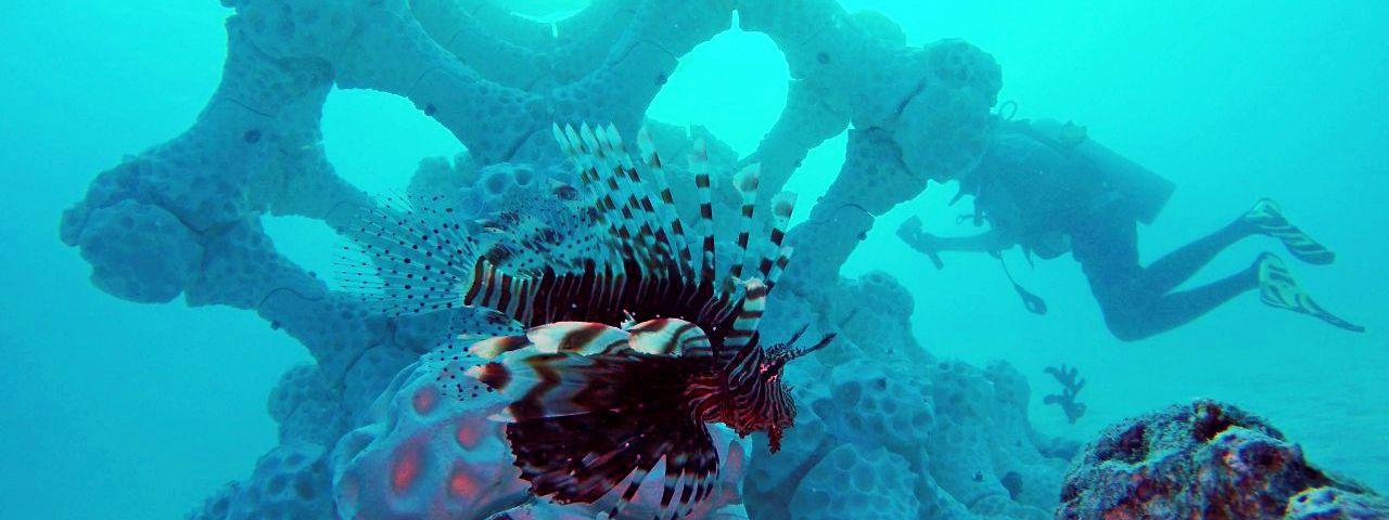 Reef Design 3D gedruckte Korallen Malediven