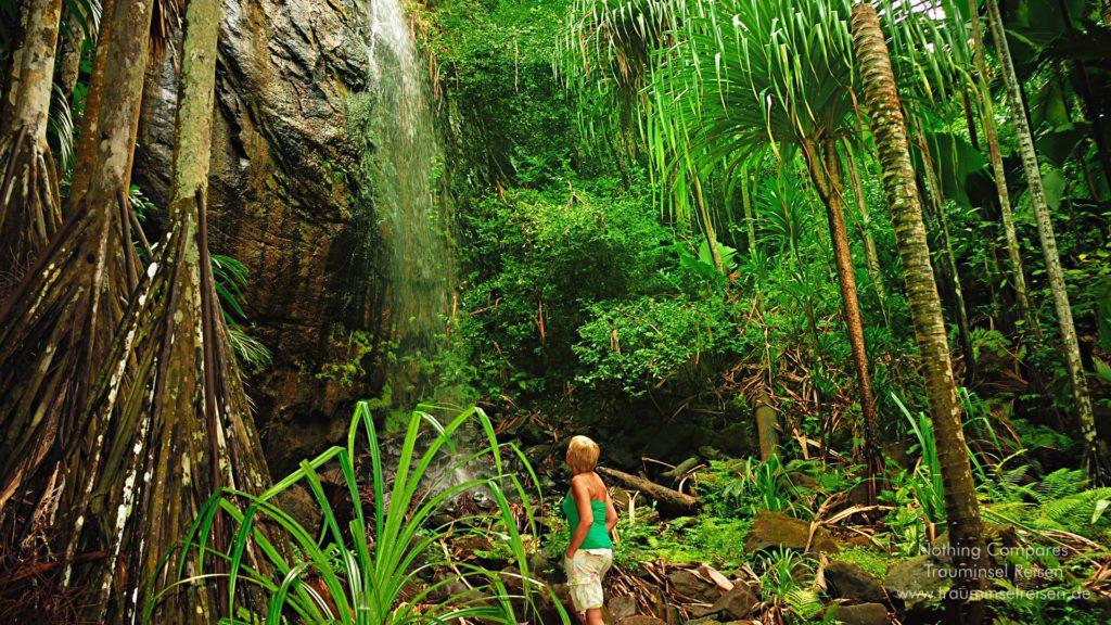 Vallee de Mai Wasserfall Trauminsel Reisen Wallpaper 1920x1080
