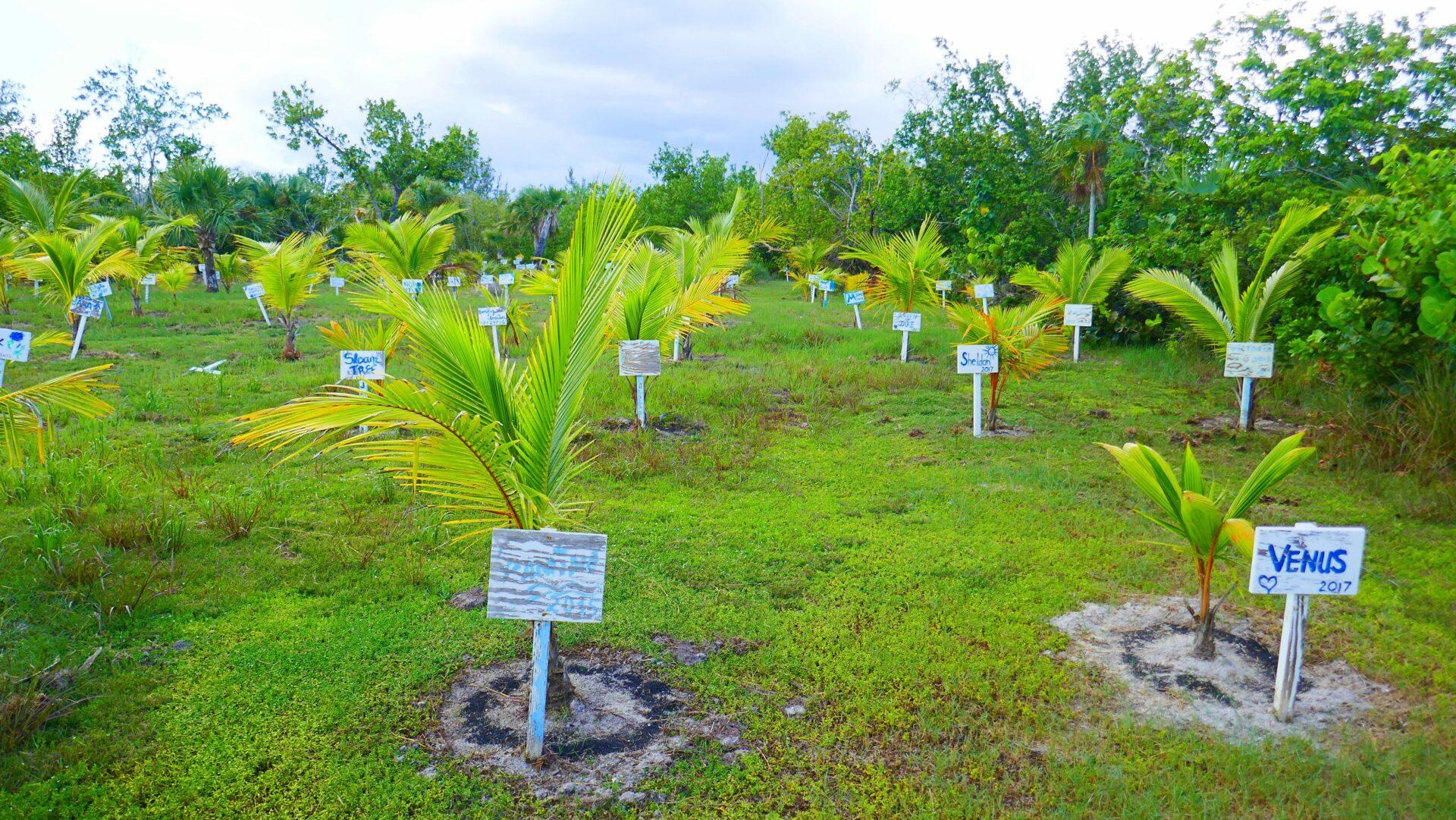 COMO Parrot Cay - eine Trauminsel zum Verlieben 3