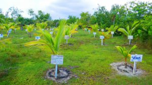 COMO Parrot Cay, Coconut Plantation