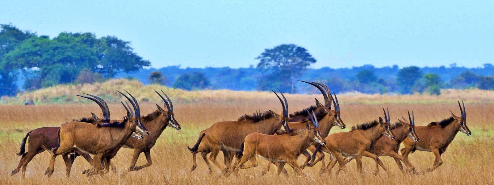 Ihre Betreuung im Südlichen Afrika