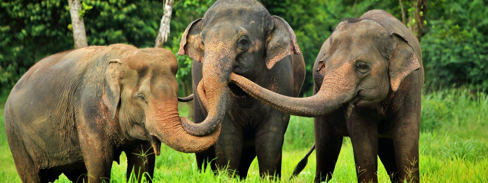 Nachhaltige Elefantenhaltung