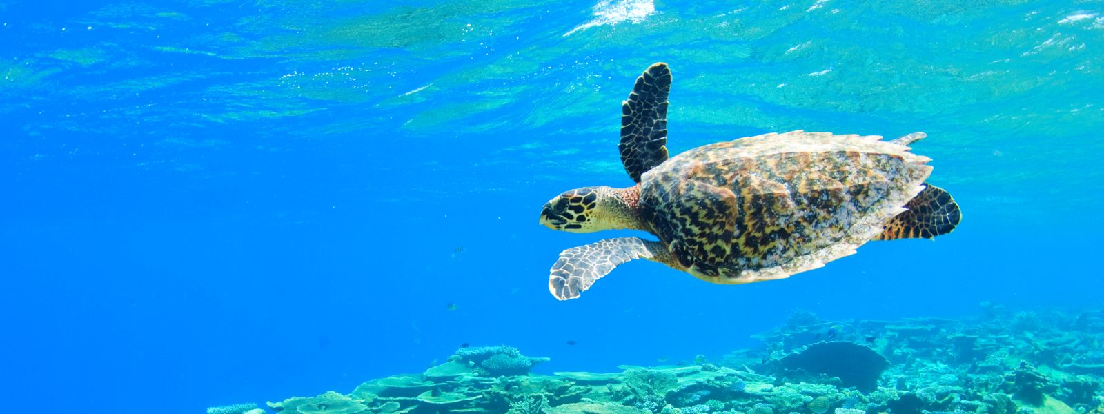 SChildkröte Malediven Nachhaltig