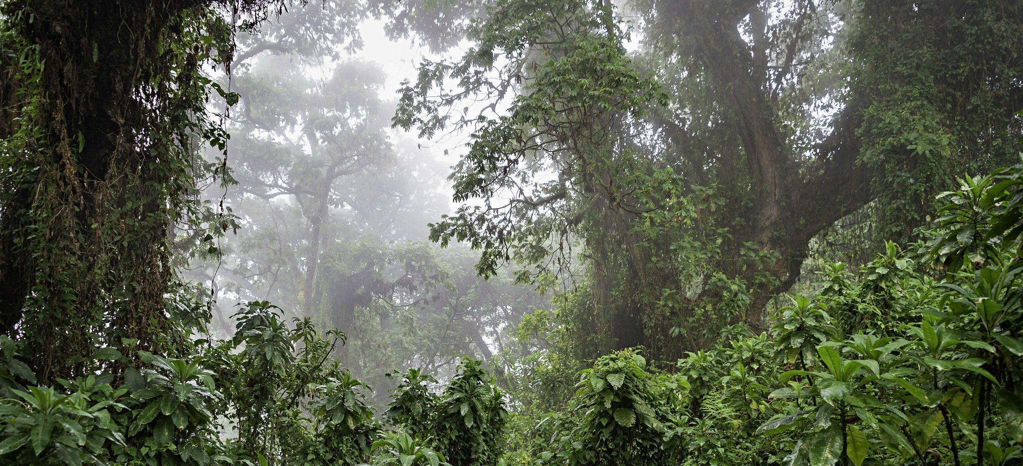 Der Dschungel nahe der Bisate Lodge, Ruanda