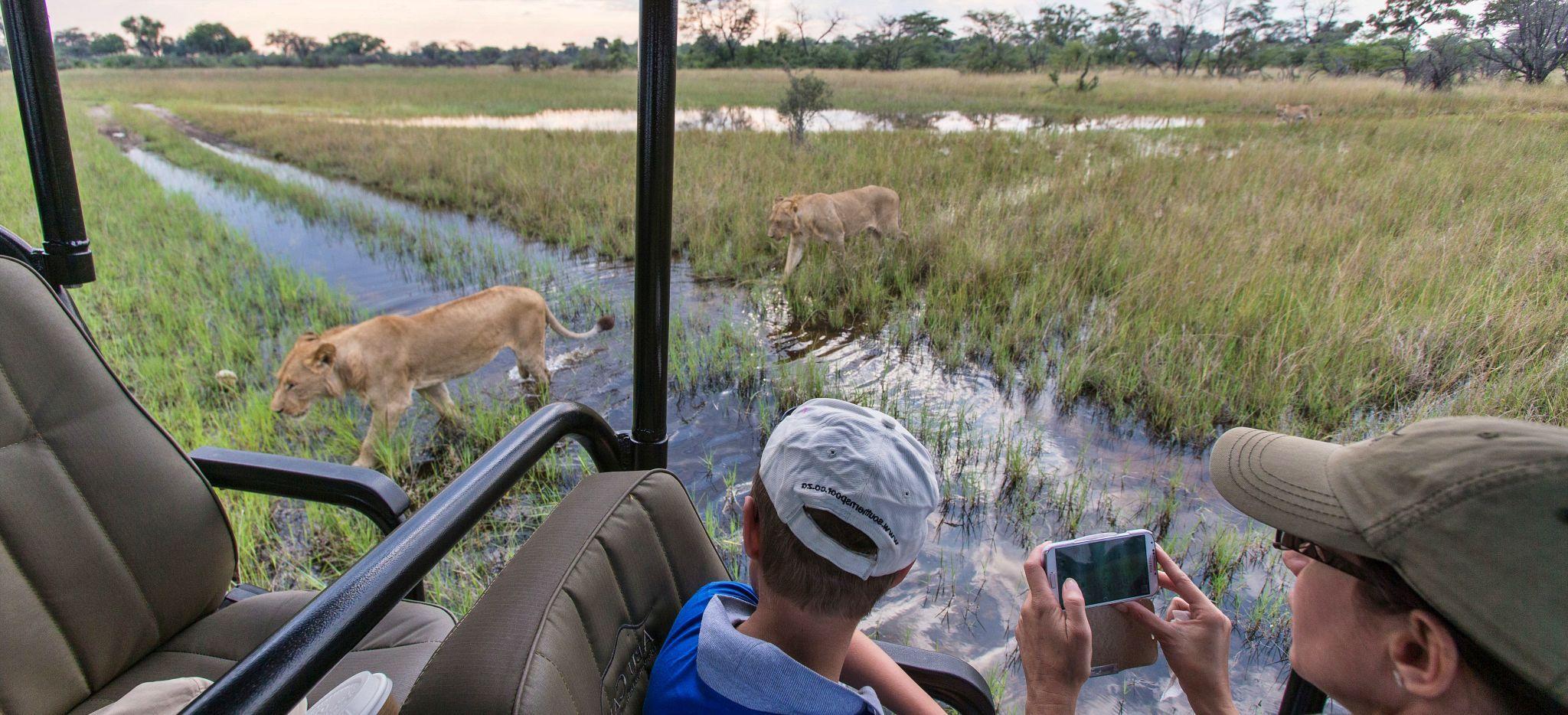Hotelgäste fotographieren Löwen direkt neben ihrem Safari-Jeep