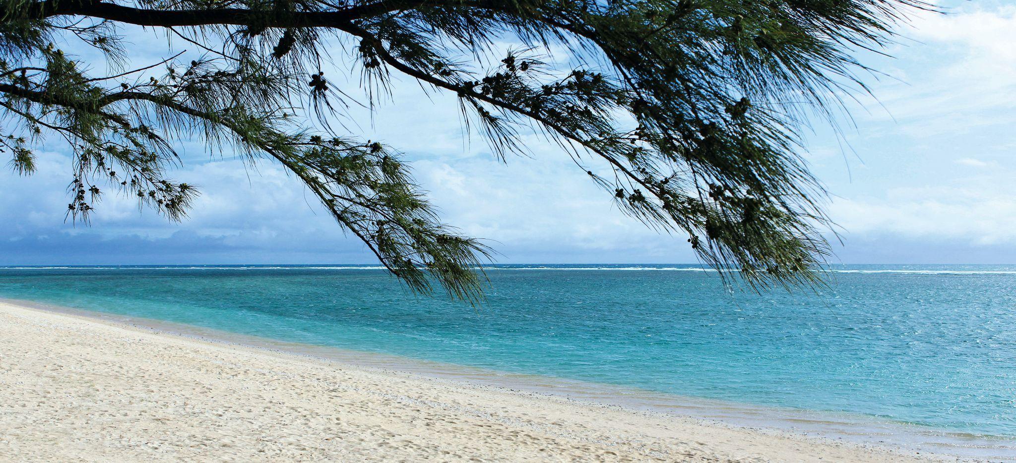 Ein Strand mit Laubbaum auf der Insel La Réunion