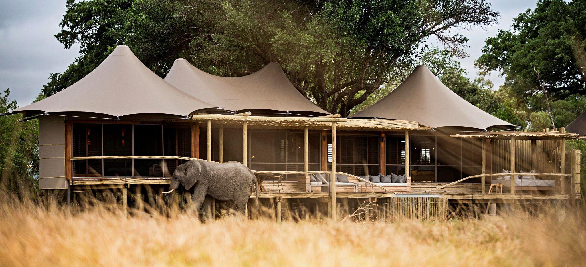 """Ein Elefant direkt vor einem der Hotelzimmer derSafari-Lodge """"Little Mombo"""" in Botsuana"""