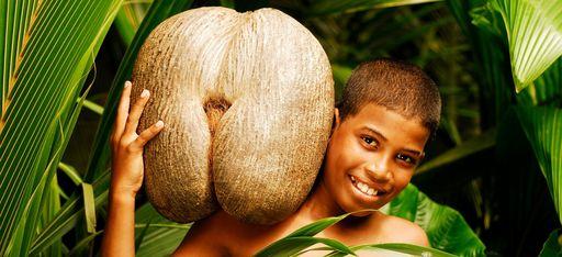 """Ein Junge steht mit einer """"Coco de Mer"""", dem Wahrzeichen der Seychellen, im Dschungel"""