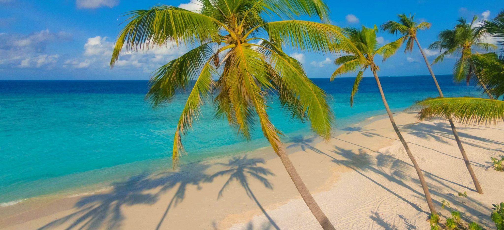 """Einige Palmen an einem einsamen Strand der Malediveninsel """"Milaidhoo"""""""