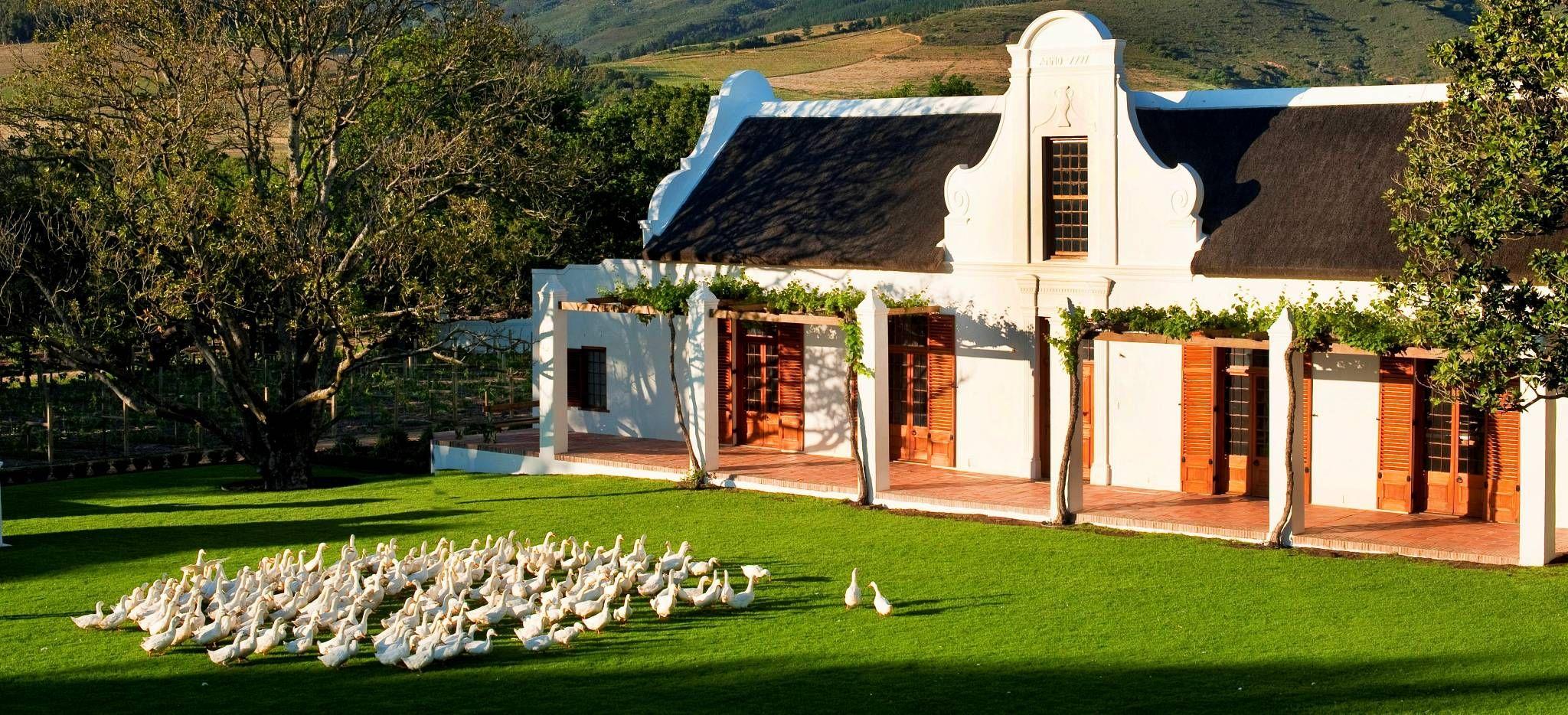 Gänse vor einer typischen Farm in Südafrika