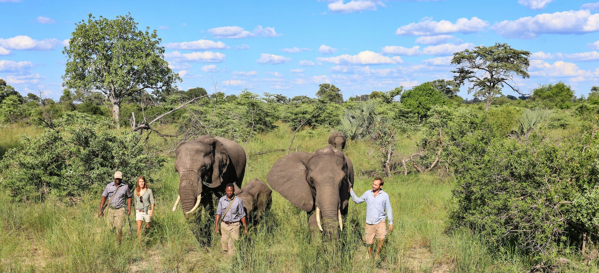 Naledi, Einige Guides und Touristen wandern mit Elephanten durch das Dickicht des Okavango Delta