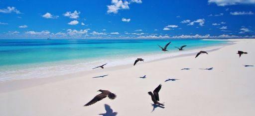"""Einige Vögel auf dem weißen """"West Beach"""" von Bird Island"""