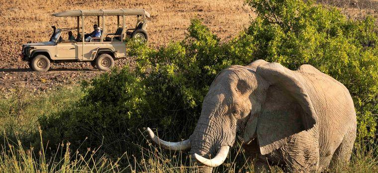 Ein Elefant wird von einem Jeep aus beobachtet