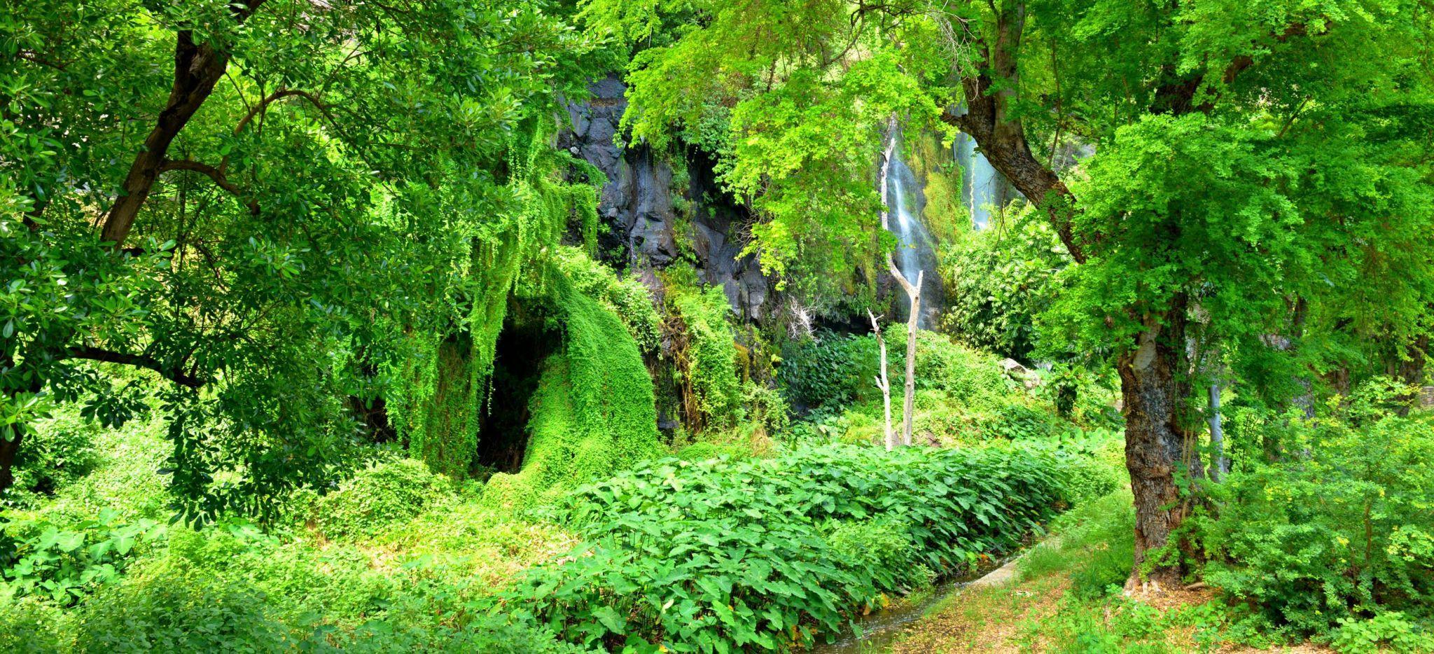 Der Dschungel rund um die Grotte des premiers francais auf der Insel la Réunion