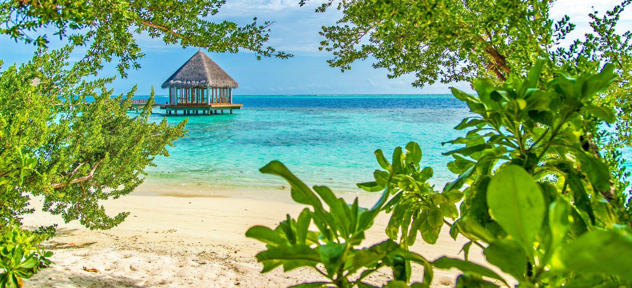 Ein Strand und Meer durch Gebüsch gesehen