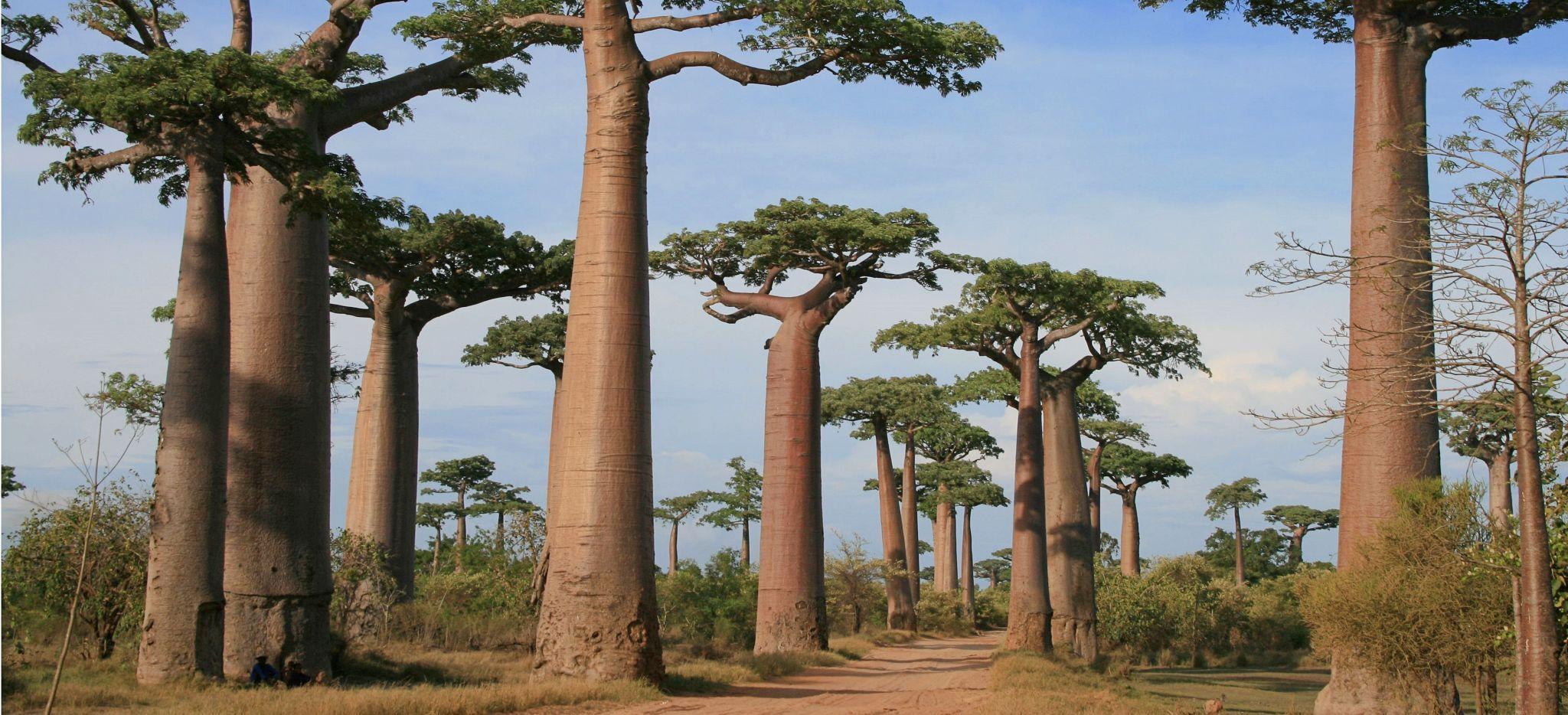 Islamisierung bedroht auch Schwarzafrika. Was interessiert uns Madagaskar?